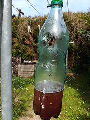 Piège à Frelons Asiatiques le 19 - 04 (1) - Photo of Villeneuve-sur-Auvers