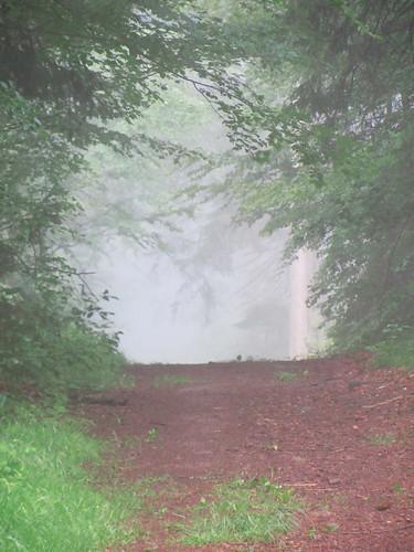 20120607 007 Wald Weg Nebel