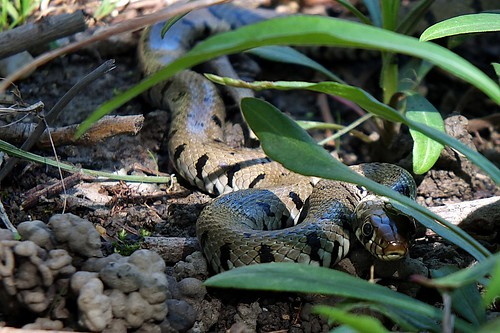 Anaconda... #FujiX-S1 #Gimp #DigiKam