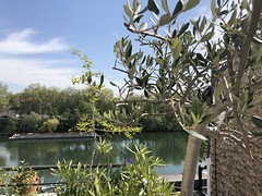 Easter on the Seine: Olive tree, Gingko, Iris & Co