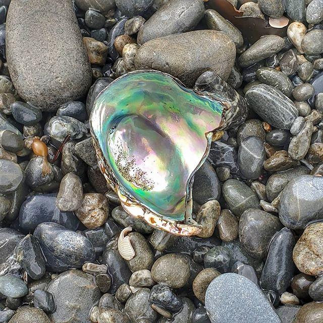 Taonga #beachcombing #eastbourne #pebbles #musselshell #treasure