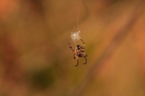 spin reppel grote brogel peer 19 04 22_