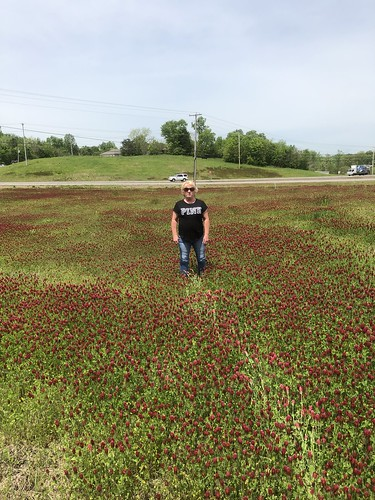 Field of Red Clover/Trifolium pratense