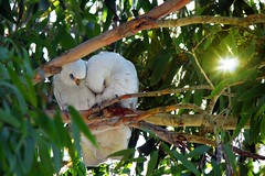 Smootching in a tree