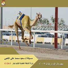 صور سباق الثنايا والحيل والزمول (مهرجان تحدي قطر 2019)