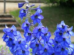 Flowers Flores - Plants Plantas