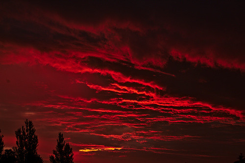 under a red blood sky