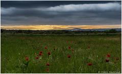 Lever de soleil sur des coquelicots ...Sunrise overs poppies - Photo of Baron