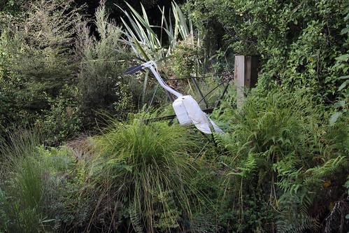 Heron hiding in the Duck pond Te Anau