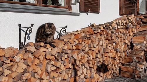 Matin d'hiver (Vandans, Osterreich)-109