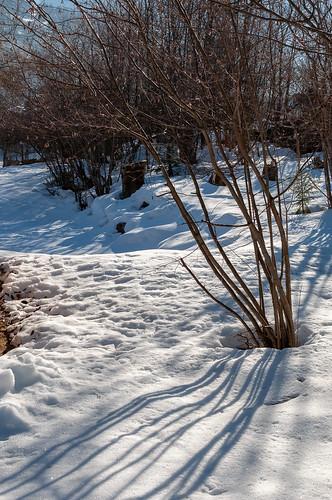 Matin d'hiver (Vandans, Osterreich)-105