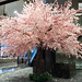 Cherry blossom tree at the lobby (changed overnight)