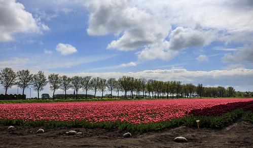Wieringermeerpolder 28 april 2019
