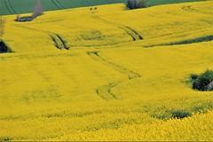 Marée jaune - Photo of Estréelles