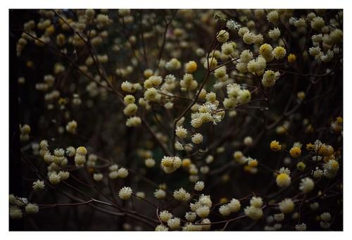 2019/3/23 - 8/15 photo by shin ikegami. - SONY ILCE‑7M2 / Carl Zeiss C Sonnar T* 1.5/50 ZM