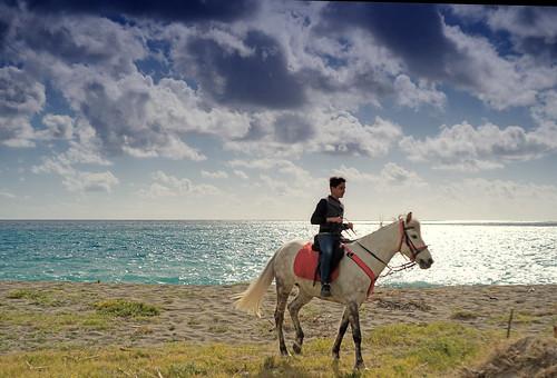 """""""Non esiste una così intima segretezza come tra cavaliere e cavallo.""""  ROBERT SMITH SURTEES"""