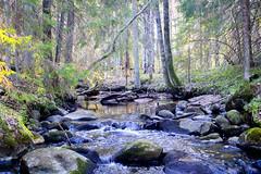 Spring forest river