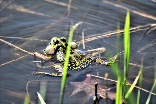 0254 Frog