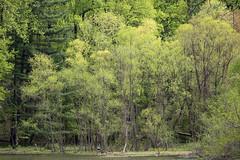 Wheaton Regional Park 22 Apr 2019  (4)