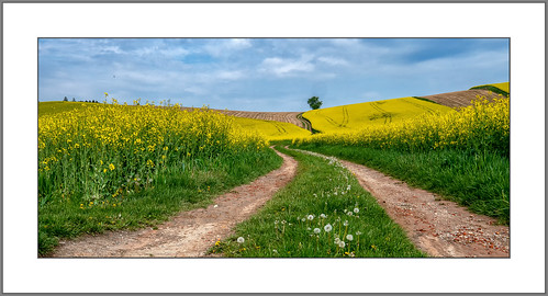 Landschaft in Gelb (Landscape in yellow)