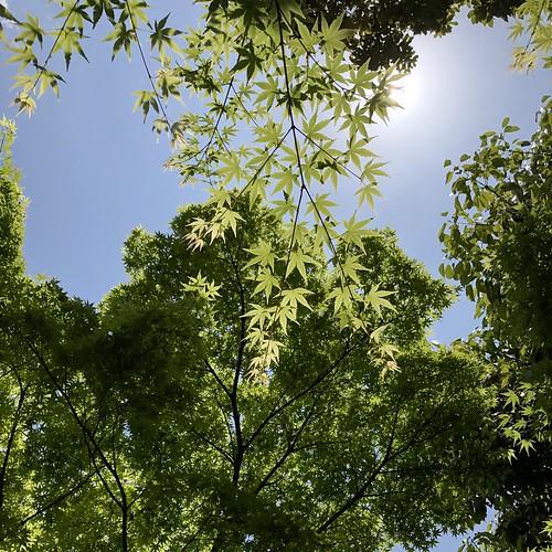 Shiratori-garden 5