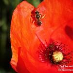 Primer macro de insectos de la temporada. 2-5-2019