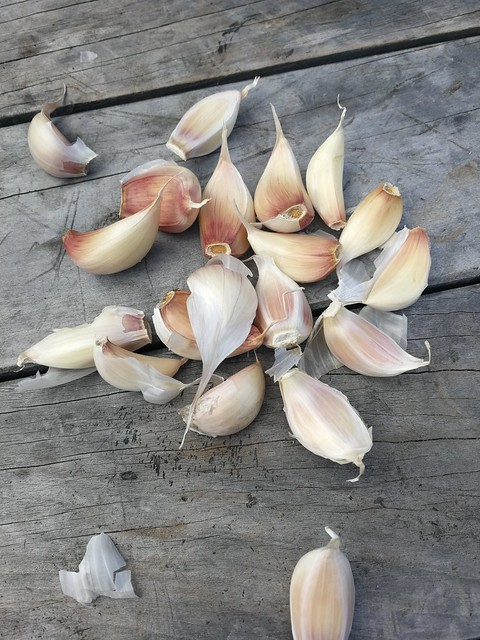 garlic seeds belonging to shiny