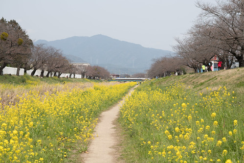 20190329 Sanagawa river bank 4