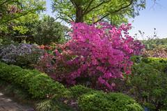 National Arboretum 27 Apr 2019  (300)