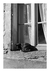 Devant la fenêtre - Photo of Quincy-le-Vicomte