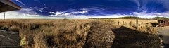 Blackwater National Wildlife Refuge Park Panorama(1)