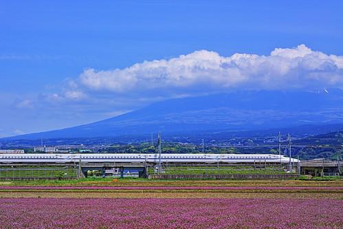 Mt. Fuji and lentil field