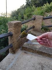 Nature, Corsica