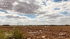 Étape N° 5  Égreville - Courtenay - Boussole pointant vers la ville de Sousse, vis-à-vis de l'atelier de Ridha Dhib