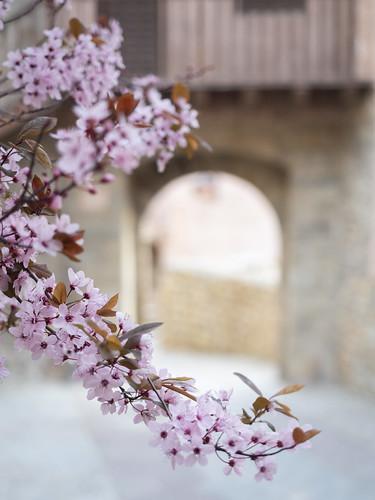 Albarracín flowers