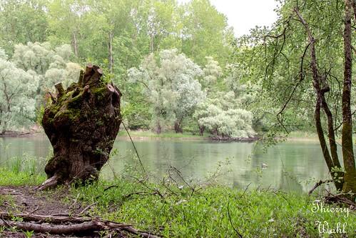 Réserve naturelle nationale du delta de la Sauer