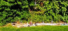Backyard Zen garden on Long Island