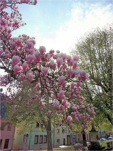 Der Frühling ist in Sicht...!