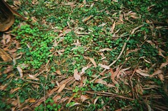 Dead leaves and weeds