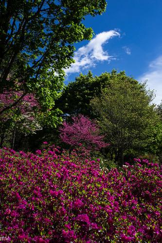 The Smokies #18: Biltmore Gardens
