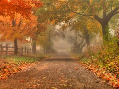Gravel roadway early autumn - Colts Neck