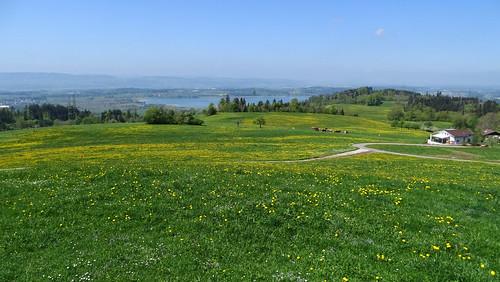 Frühling im Züricher Oberland