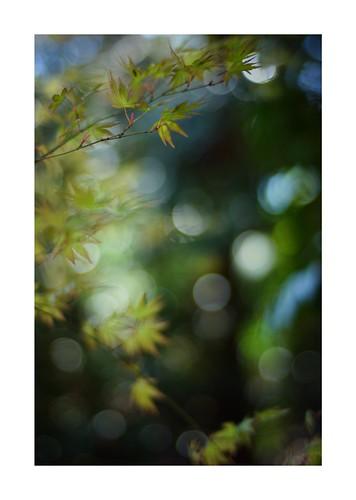 2019/4/3 - 2/12 photo by shin ikegami. - SONY ILCE‑7M2 / Carl Zeiss C Sonnar T* 1.5/50 ZM
