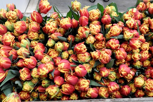 Tulips at Munster Flowers, Slootdorp, Netherlands