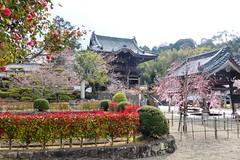 Kokawa-dera, Chumon (Gate) -1, (April 2019)