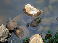 Turtle & Toad