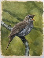 Bird_02