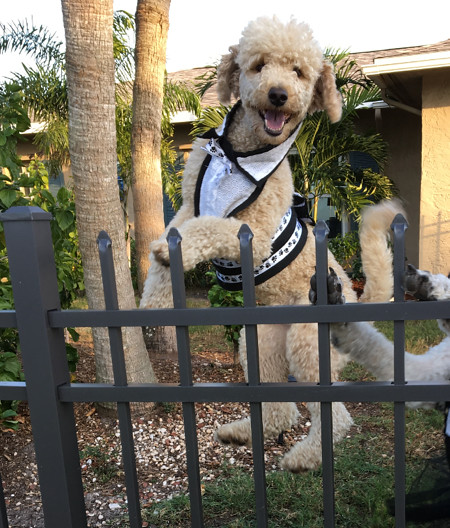 Remy from North Fort Myers