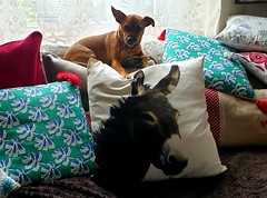 Lily et le beau coussin...