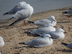Gulls in the Sun